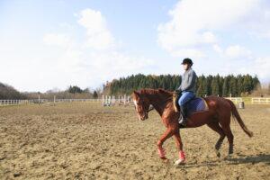 青森市.騎馬體驗